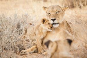 Image result for masai mara 300x200